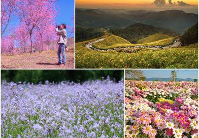 9 เส้นทางสำหรับเที่ยวชมดอกไม้ในช่วงหน้าหนาว ในประเทศไทย