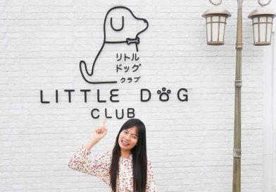 คาเฟ่หมา (Little Dog Club) คาเฟ่หมาน่ารัก สวรรค์ของน้องหมา และคนรักหมา